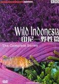 BBC:印尼-野生篇 海报