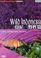 BBC:印尼-野生篇