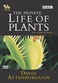 植物私生活 海报