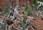 《狐猴之岛:马达加斯加》超清主创访谈