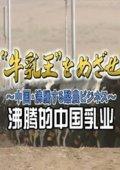NHK:沸腾的中国乳业