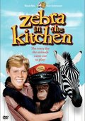 Zebra in the Kitchen 海报