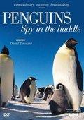 BBC:企鹅群里有特务 海报