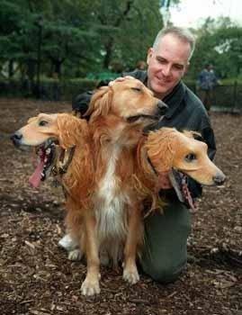 神奇的三头狗 - 世界奇观