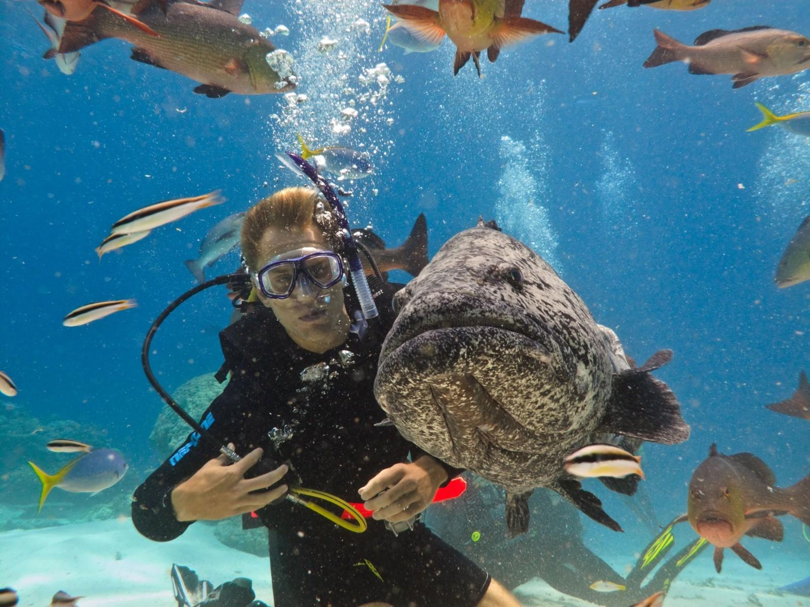 壁纸 海底 海底世界 海洋馆 水族馆 1600_1200