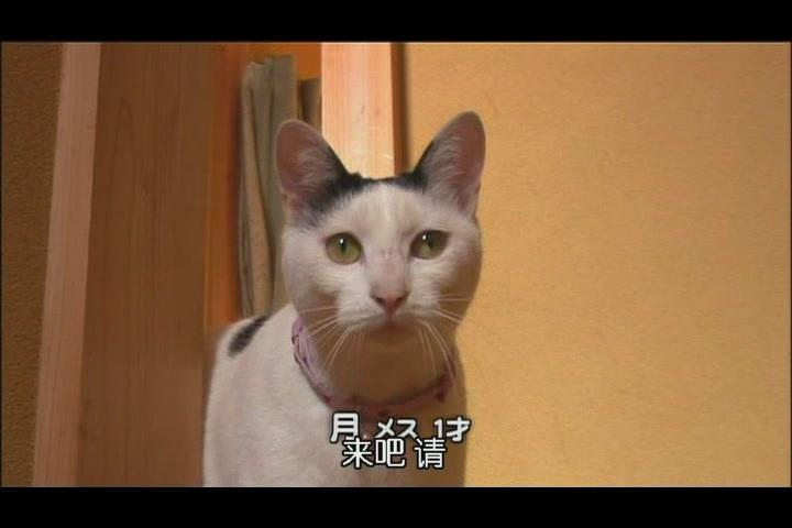 画猫咪的步骤图解