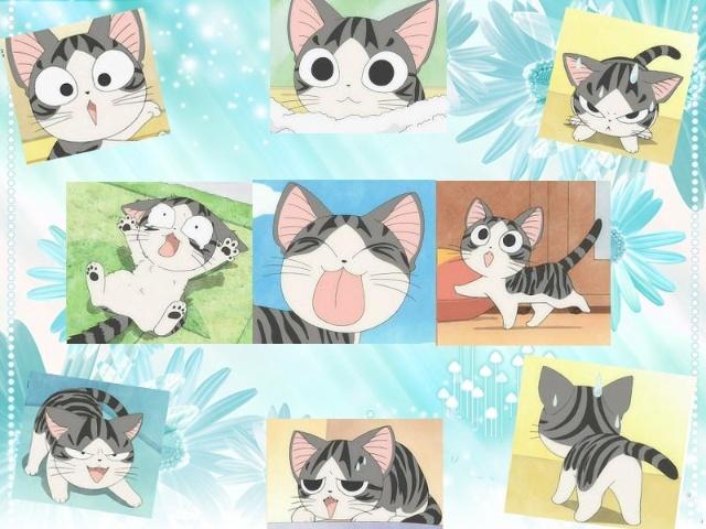 起司猫高清大图_甜甜起司猫高清壁纸; 起司猫 爆可爱的小起 动漫