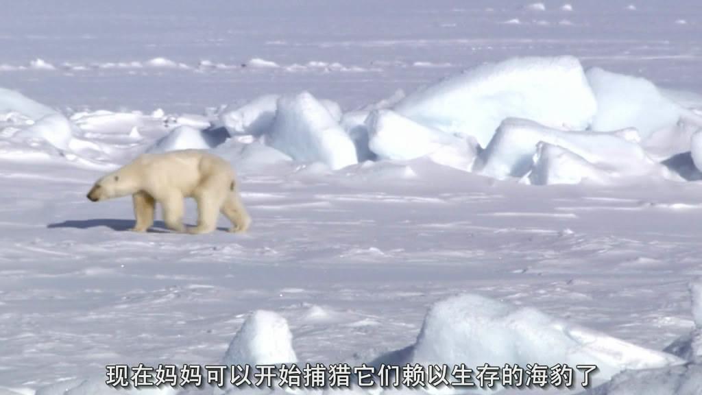 bbc:地球脉动(planet earth)
