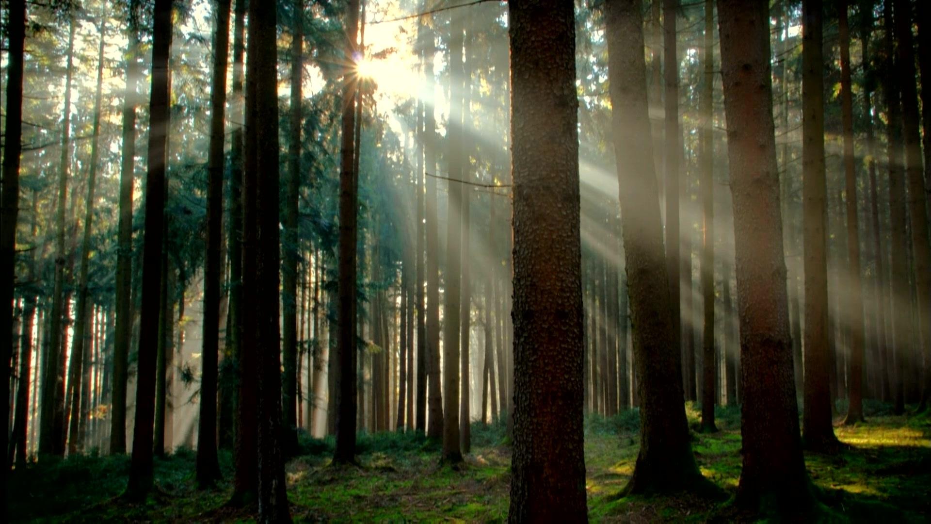 神话的森林