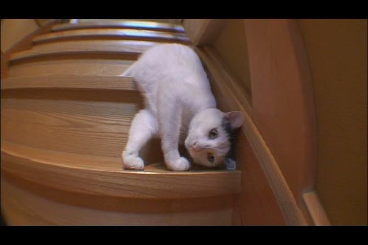 素描猫咪图片步骤图解