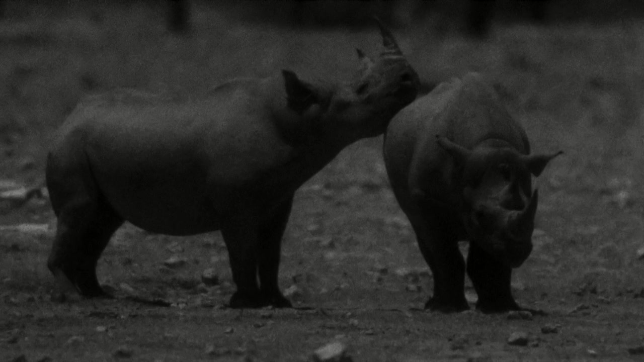 5Yab5LqL6LWE6K6v_bbc 非洲 bbc africa 对bbc的纪录片 the meerkats 的感想...