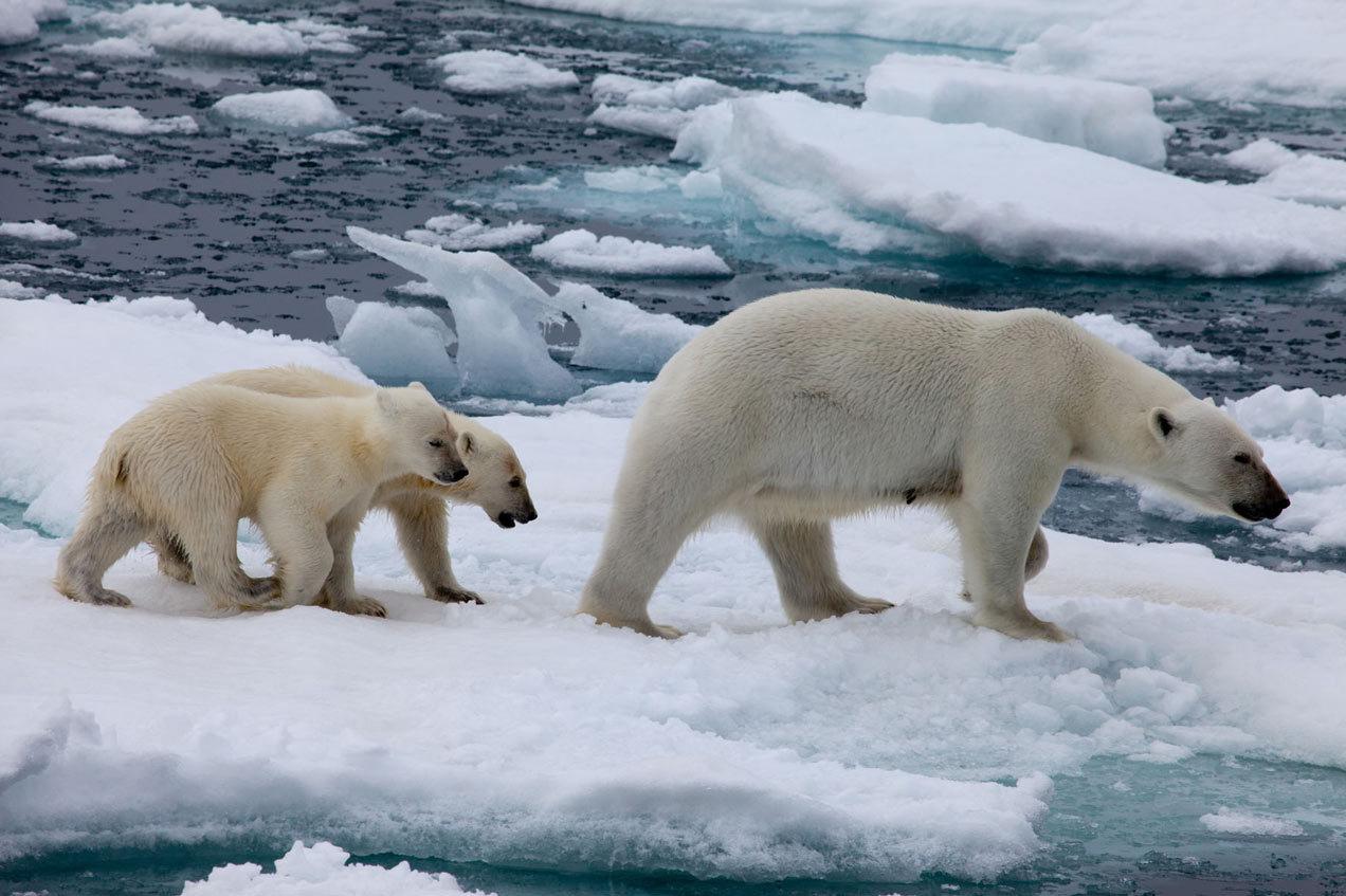 北极住的动物有哪些?